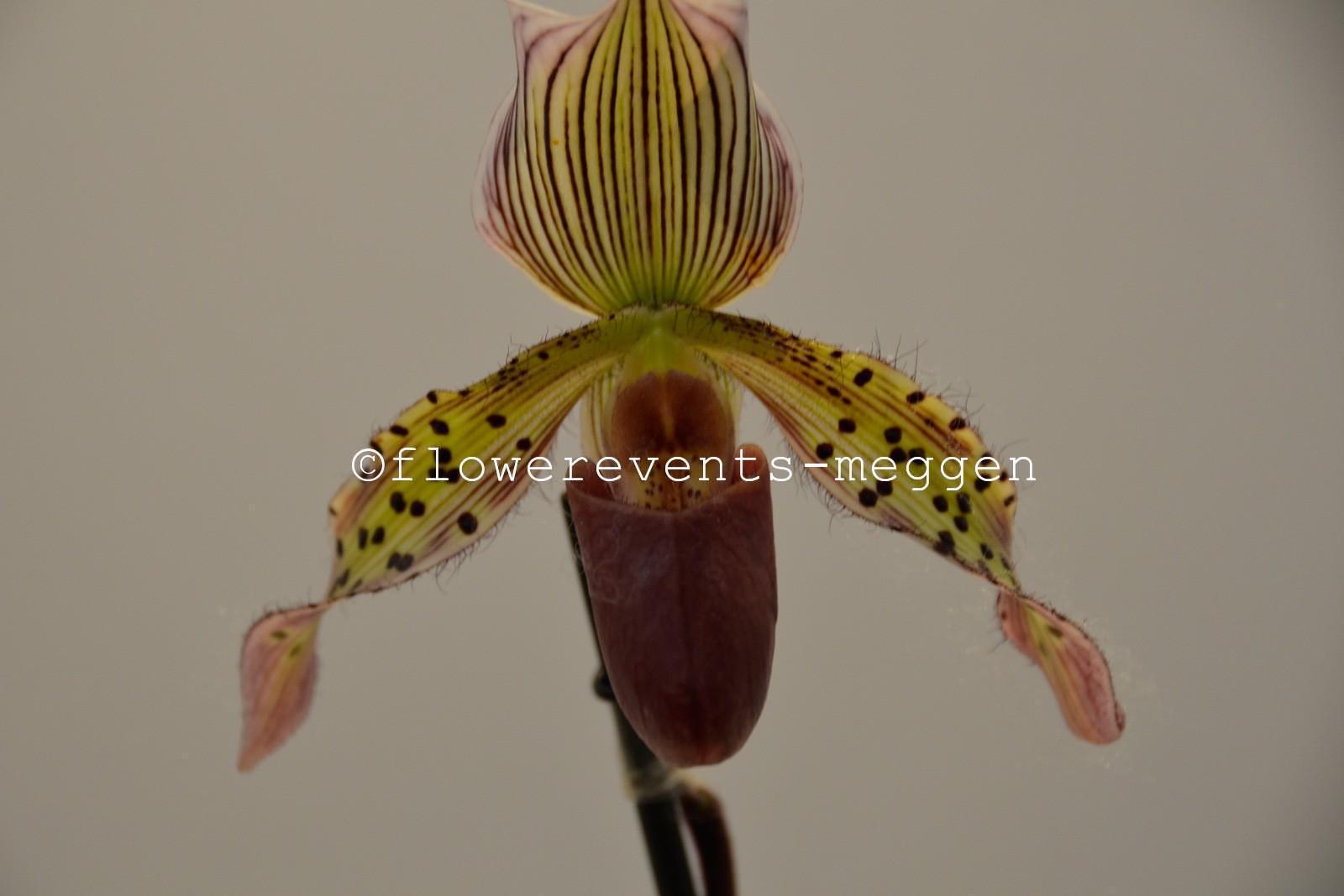 orchideen pflanzen luzern phalaenopsis vanda blumen. Black Bedroom Furniture Sets. Home Design Ideas