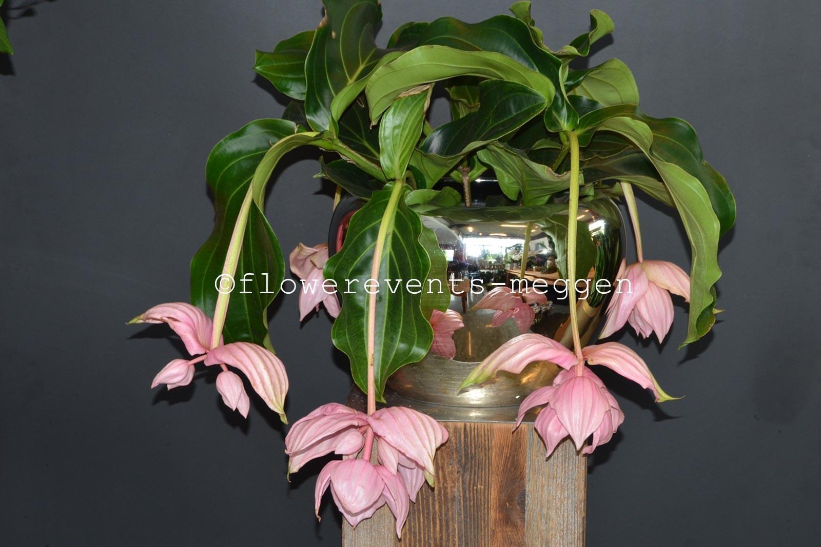 Bl hendes blumen flowerevents luzern for Spezielle zimmerpflanzen