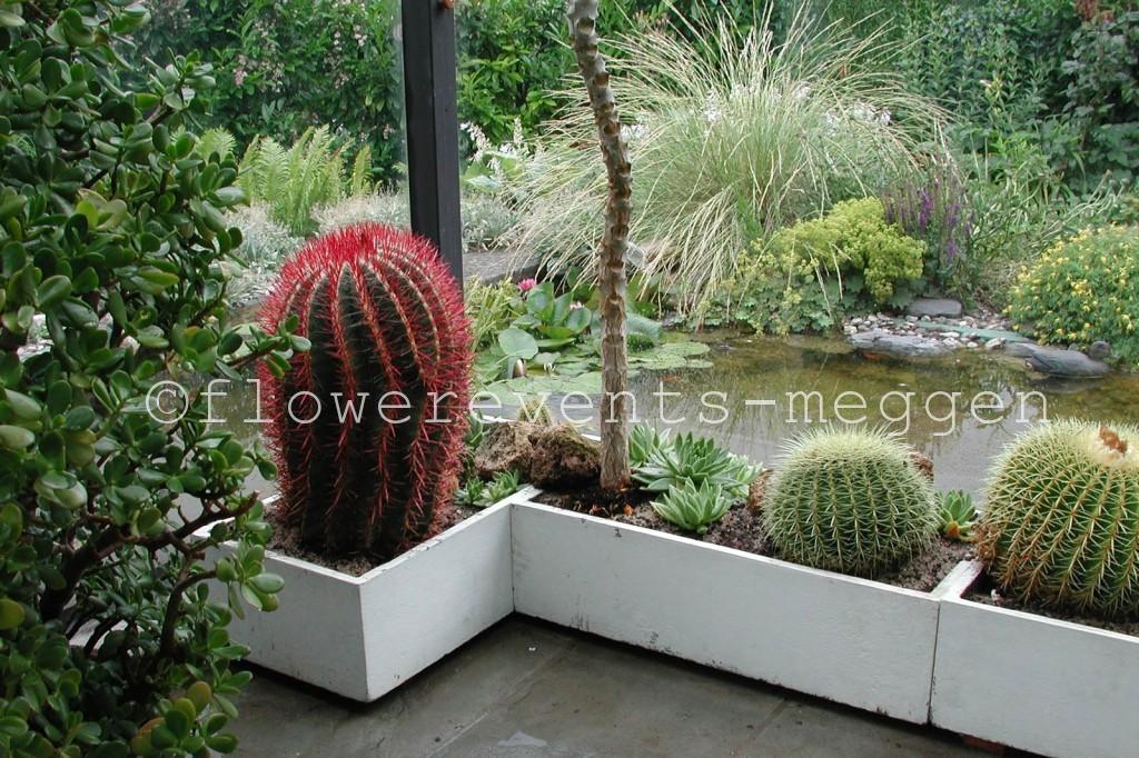 pflanzen f rs zimmer die terrasse oder im garten. Black Bedroom Furniture Sets. Home Design Ideas